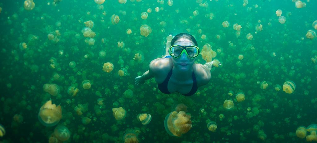 pristineparadisepalau - Jellyfish lake