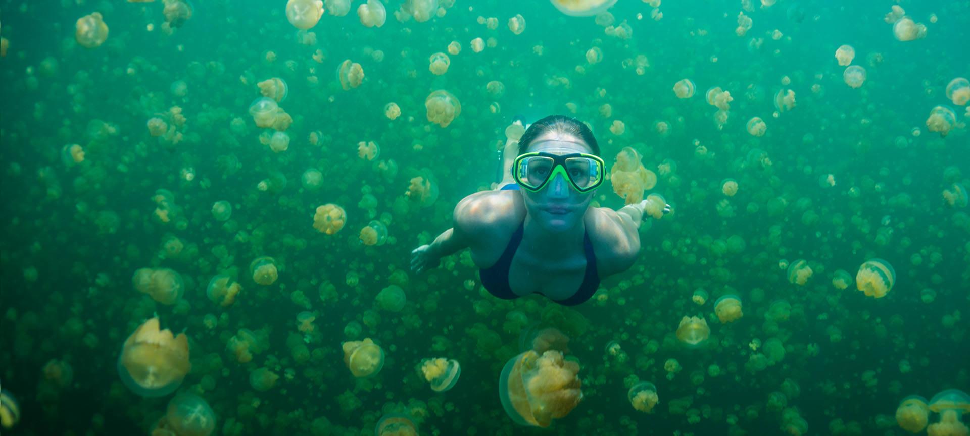 Jellyfish lake Swimmer - Pristineparadisepalau